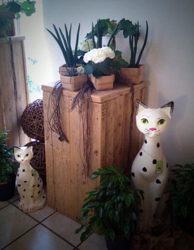 Katzen Und Pflanzen