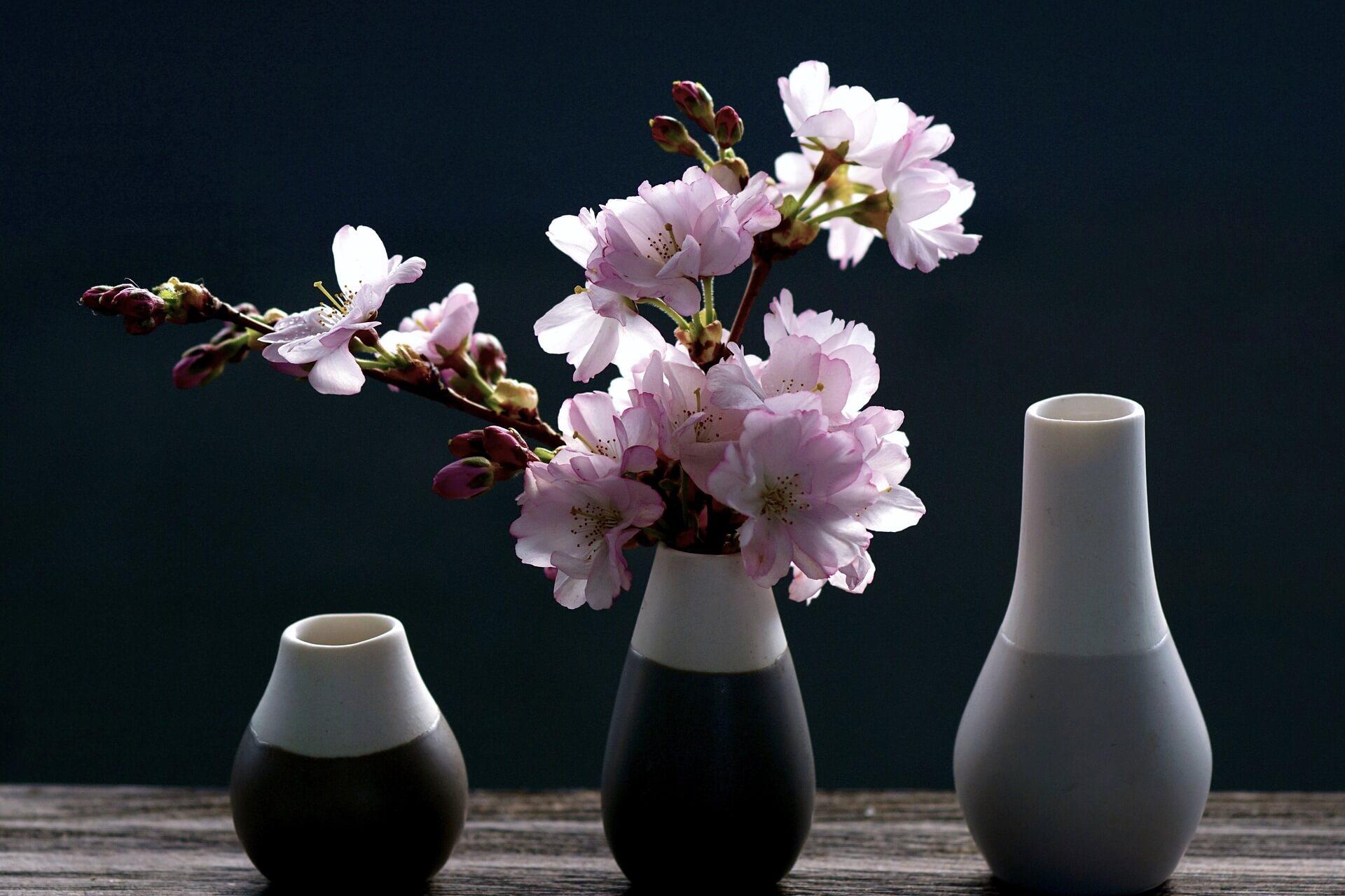 Kirschblueten In Vasen