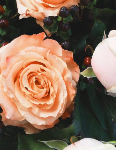 Rosen apricotfarben