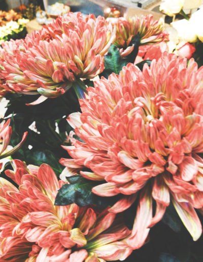 Wunderschöne Chrysanthemen bei Wolf Kühnle